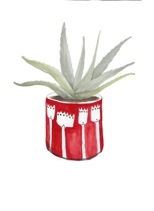 Aloe vera watercolour