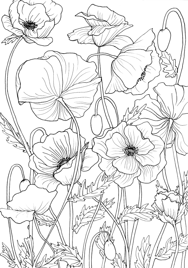 poppies line drawing